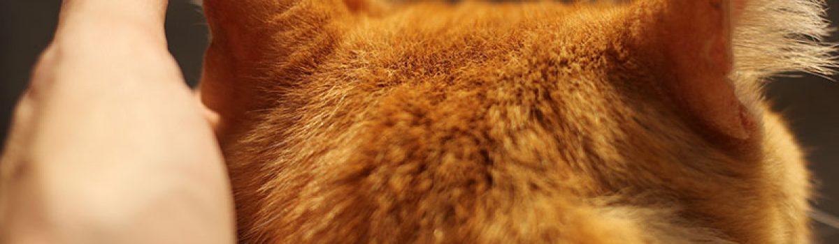 reiki-lahochi-chat-animaux-domestiques-guidel